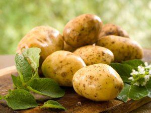 Молодой картофель «Золотая осень»