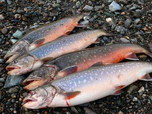 Покупка рыбы оптом в России